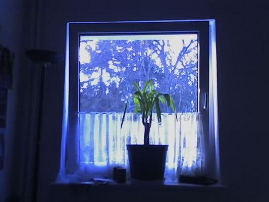 Blaue Fensterpflanze