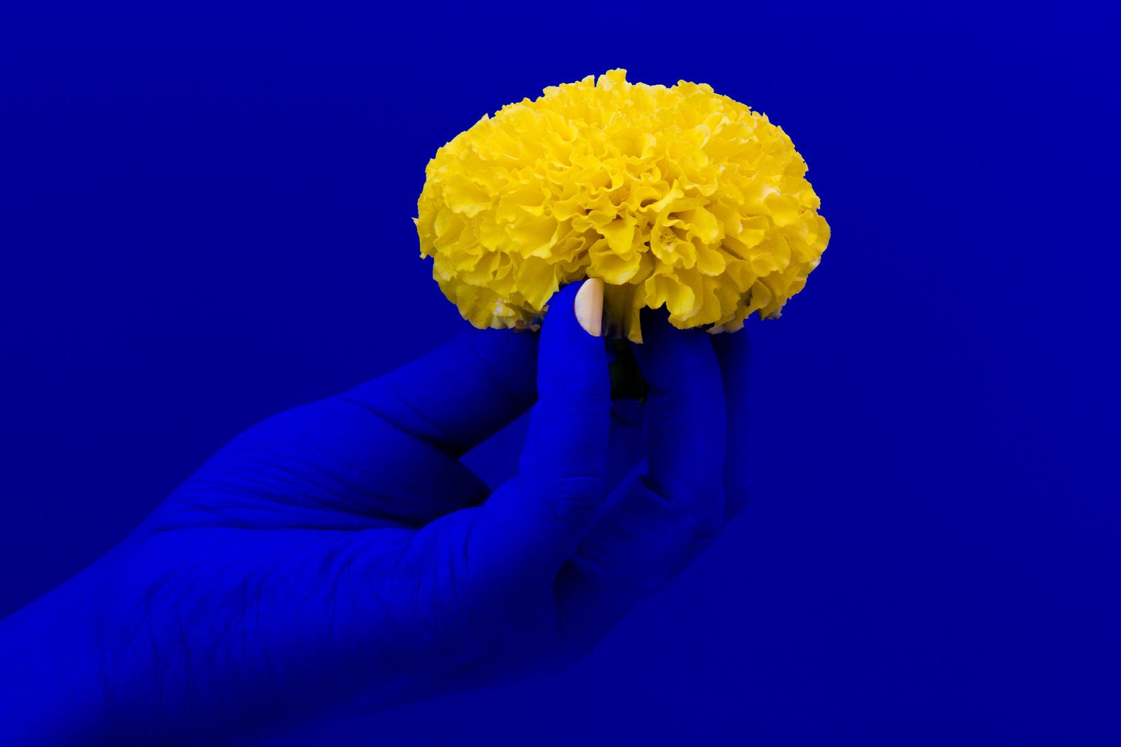 Blaue Hand mit gelber Blüte