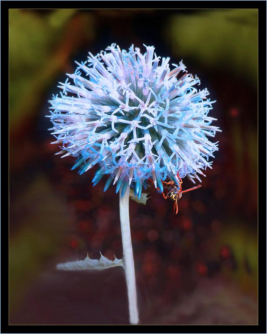 Blaue Kugel-Distel mit lustigem Besuch
