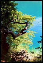 Blaue Lagune ... Lago di Tenno