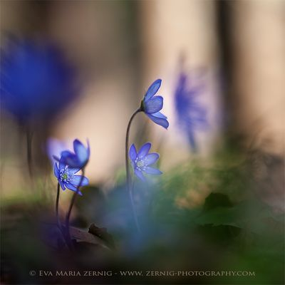 Blaue Märchenwelt