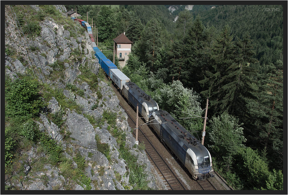 Blaue Ochsen im Gebirge