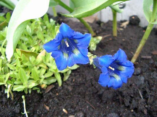 Blaue Pflanzen