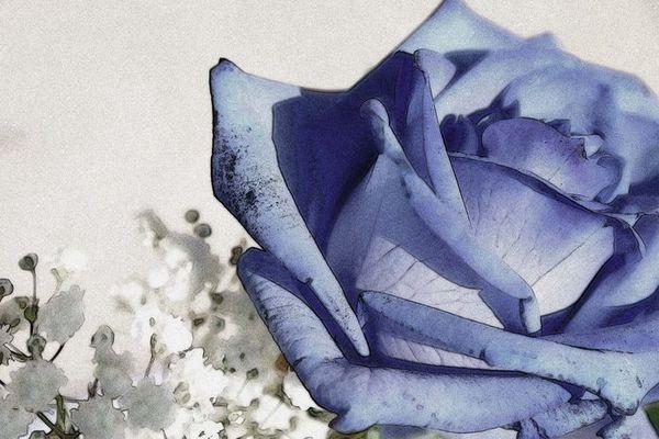 Blaue-Rose