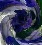 Blaue Rose de