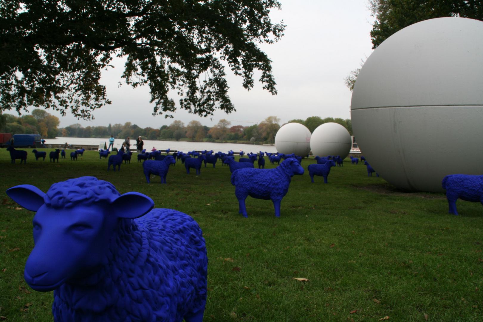 Blaue Schafe