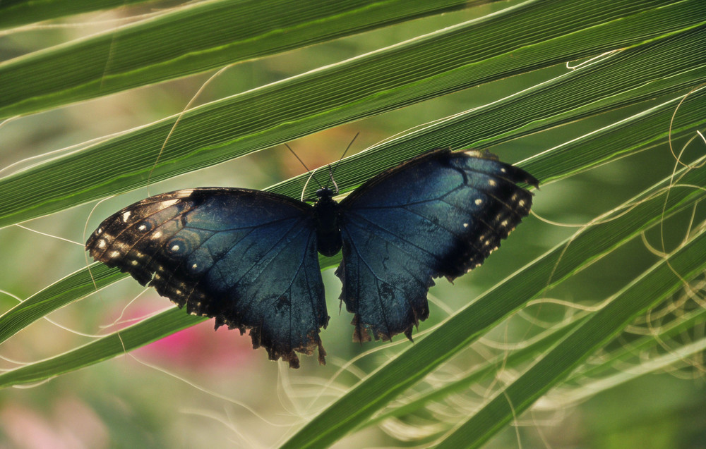 Blaue Schönheit...