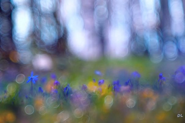 *** Blaue Sternchen ***