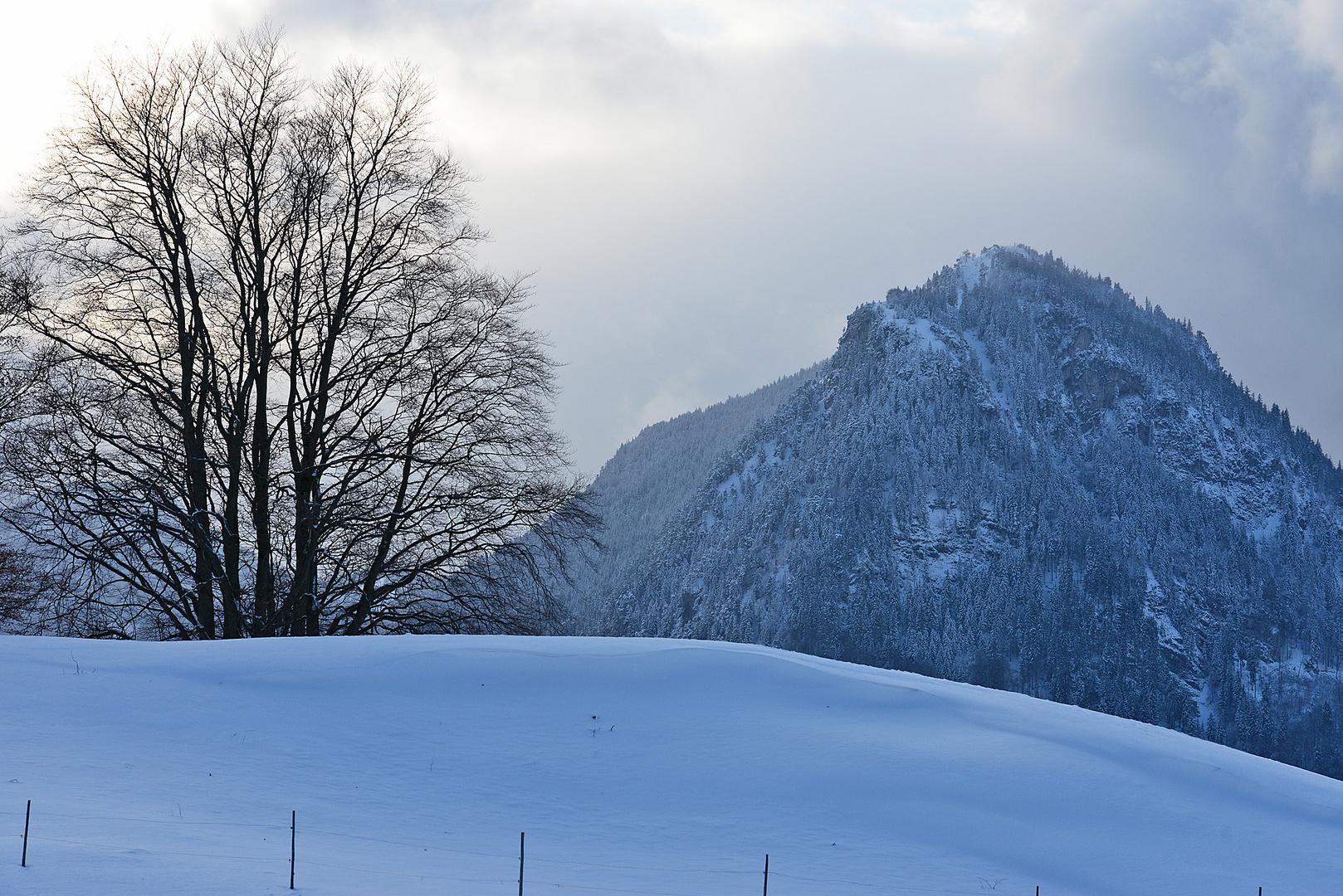 Blaue Stunde am Alpenrand