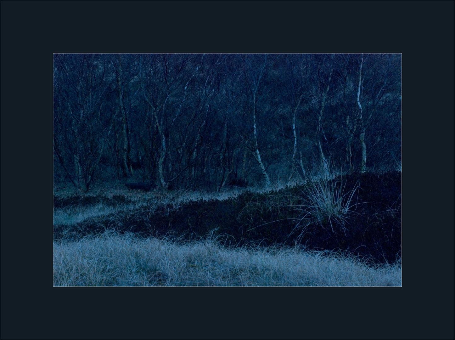 Blaue Stunde auf Spiekeroog