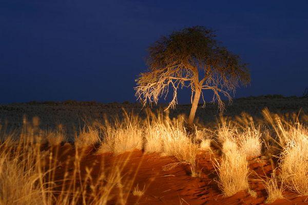 Blaue Stunde in Namibia