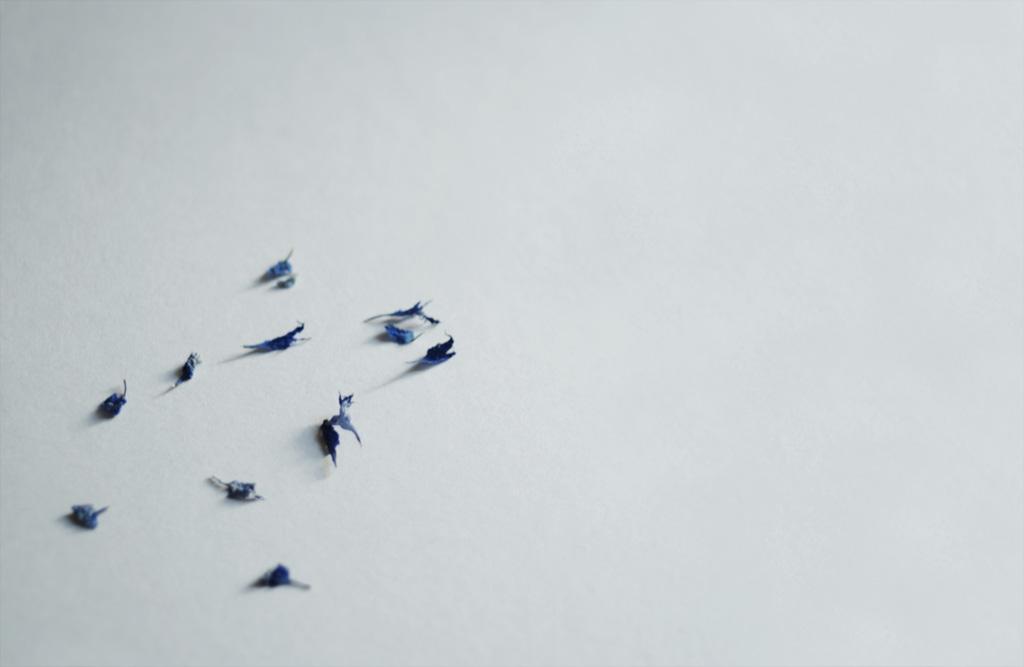 Blauer Colibri