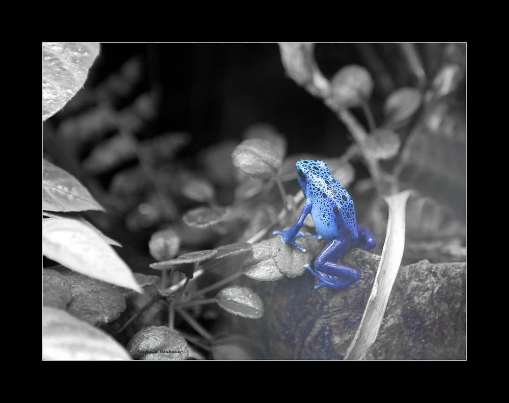 ~~~ blauer Frosch ~~~