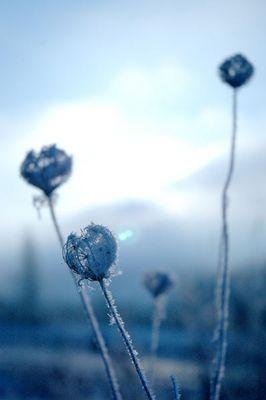Blauer Frost