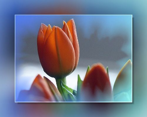 Blauer Frühling