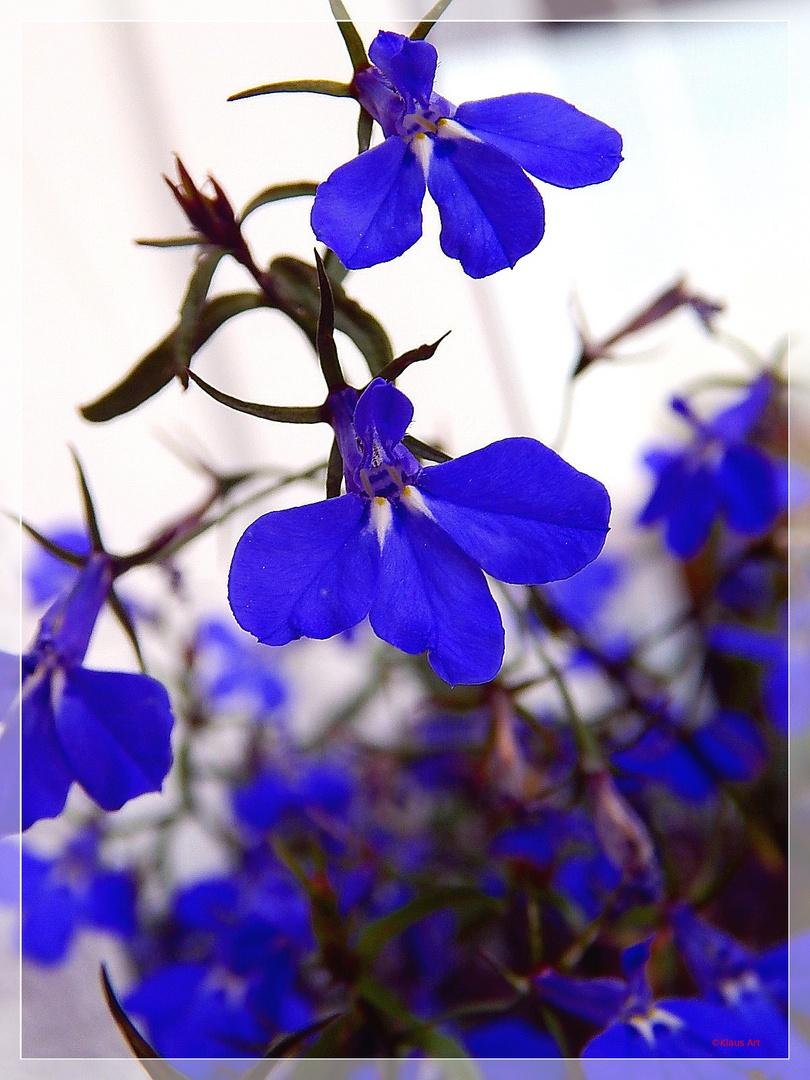 Blauer Herbst