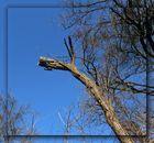 Blauer Himmel im Januar