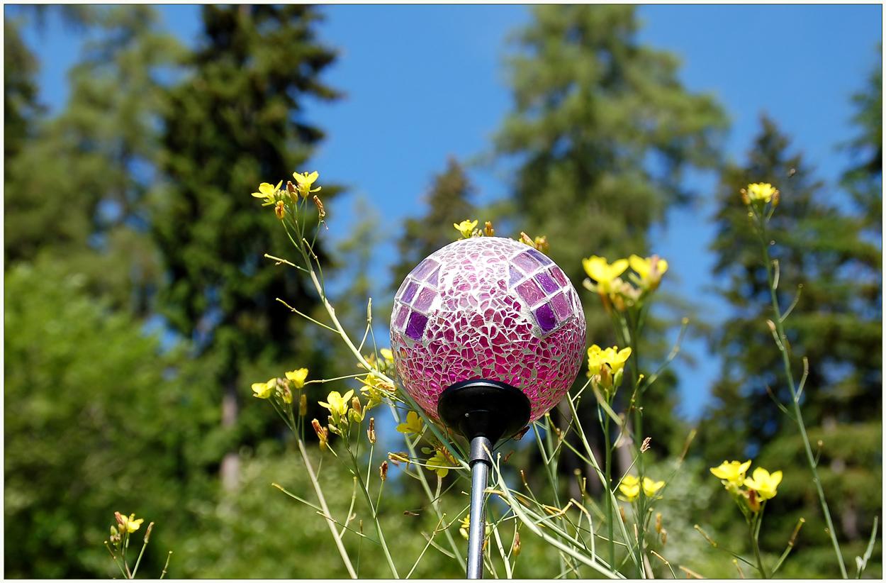 Blauer Himmerl, Wiesenblümchen und Sonne...