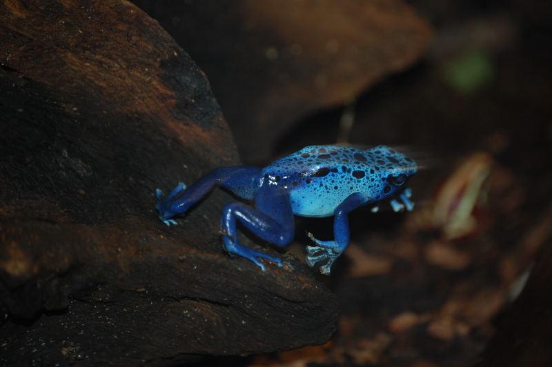Blauer Sprung...