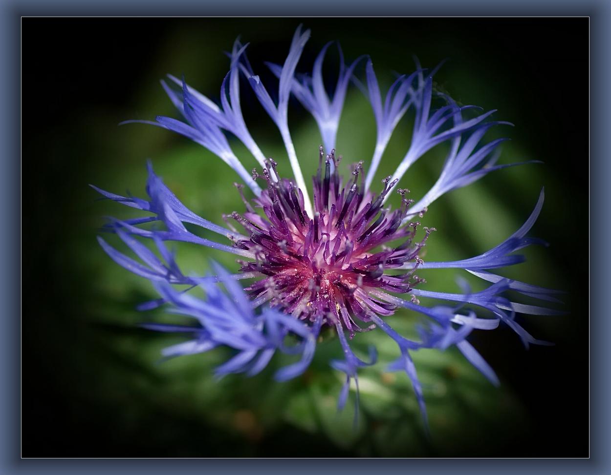 blauer Traum....