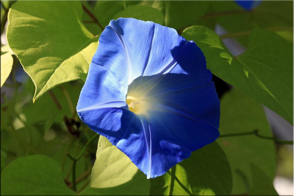 blauer Trichter ...