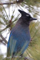 Blauer Vogel 2