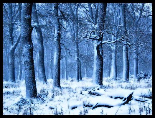 Blauer Wald