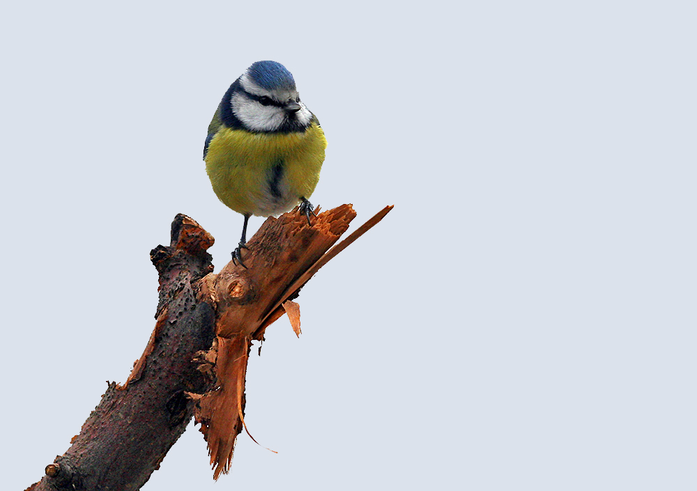Blaues Bällchen mit hohem Niedlichkeitsfaktor, dem ich mich auch nicht...