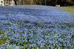 blaues Farbenmeer 2