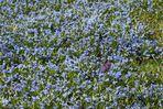 blaues Farbenmeer 4