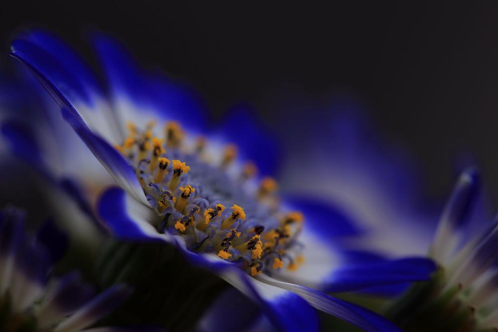 blaues Mittwochswunder.......