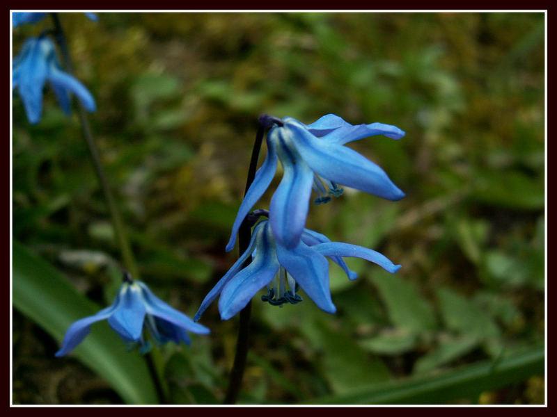 Blaues Sternchen