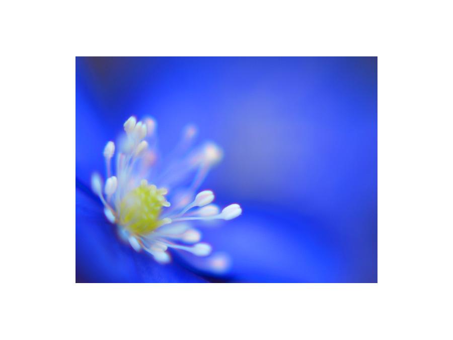 """""""Blaues Wunder"""""""