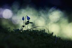 Blaues Zwergenland