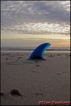 Blauflossen Sandhai.