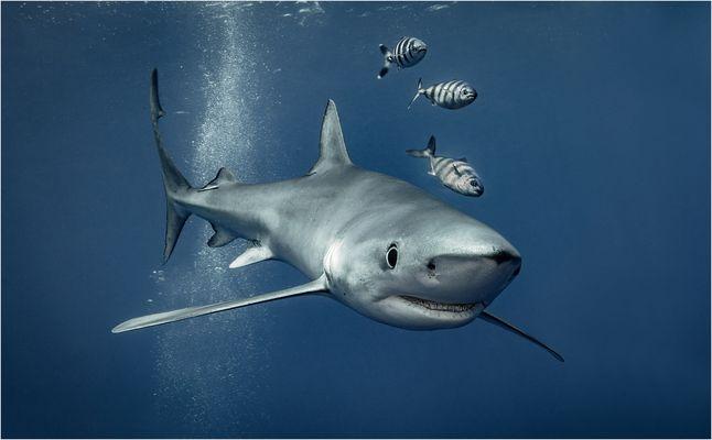 Blauhai und Freunde