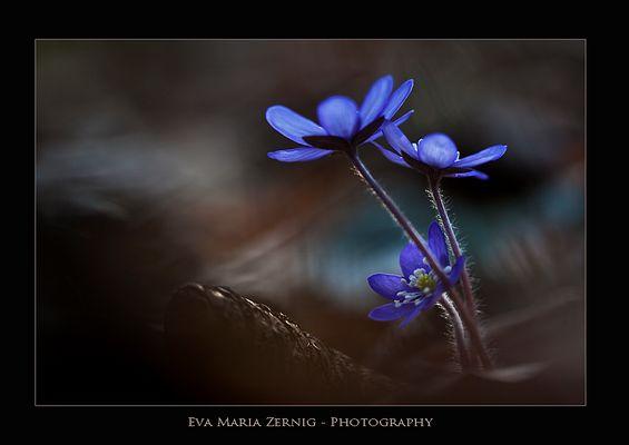 Blaulicht ...