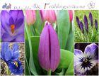 BlauLila Frühlingsträume