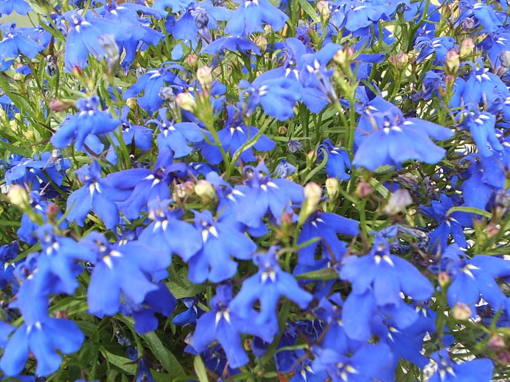 Blaurausch