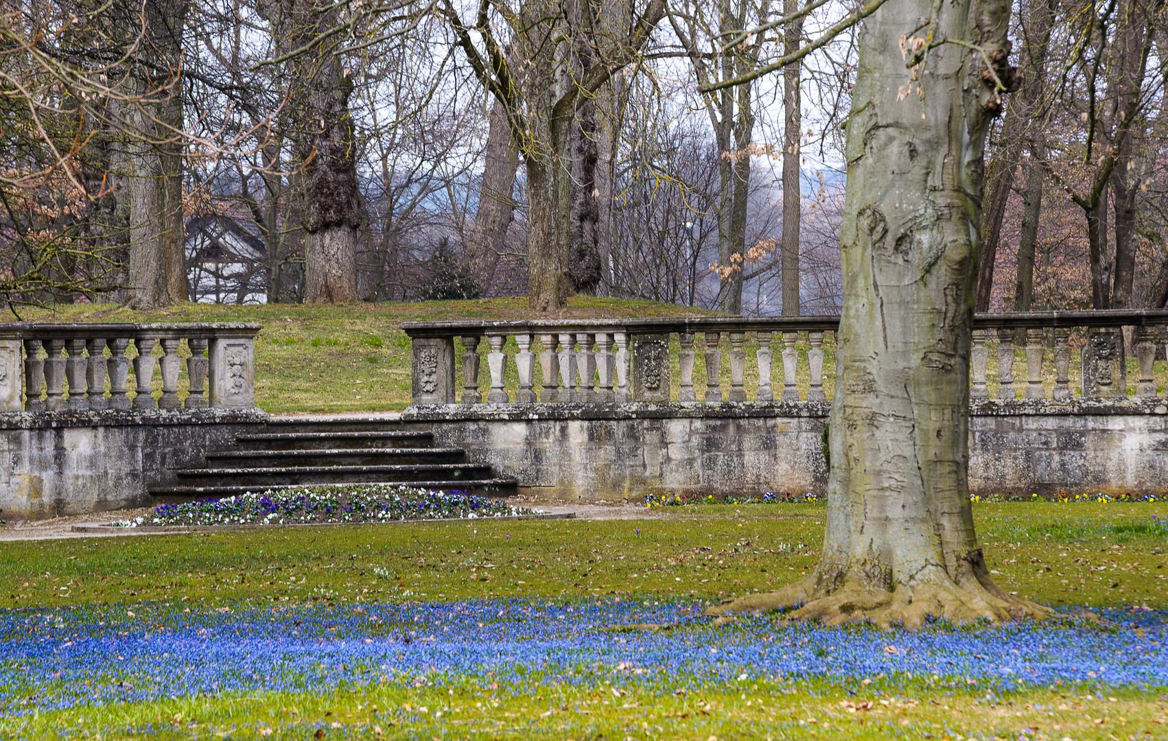 Blausternchen in Ellingen