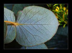 Blauw_grijs blad