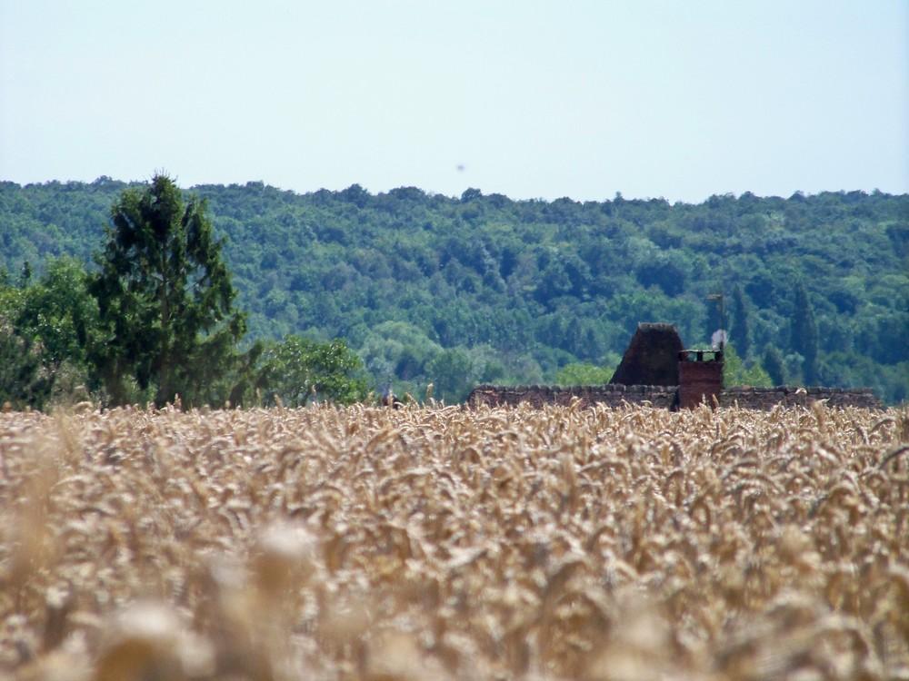blé des champs !!