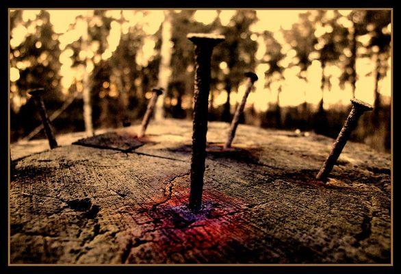 bleeding nature