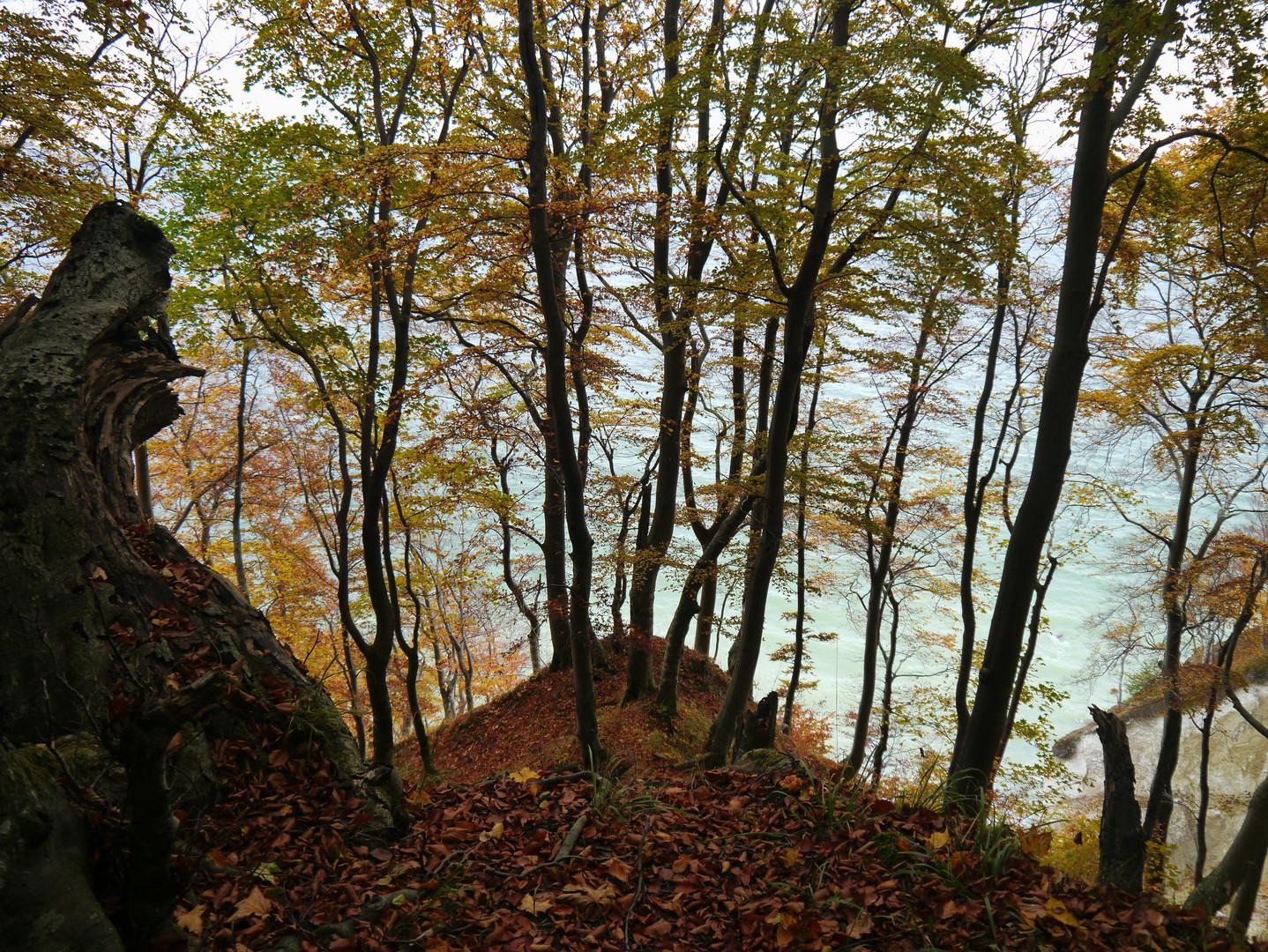 bleiches Herbstlicht