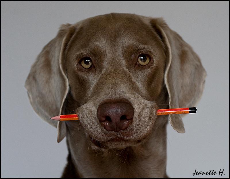 Bleistift-Halter ;-)