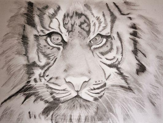 Bleistiftzeichnung eines Tigers