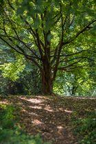 Blende 1.2 - Baum