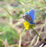 Bleu azur ...