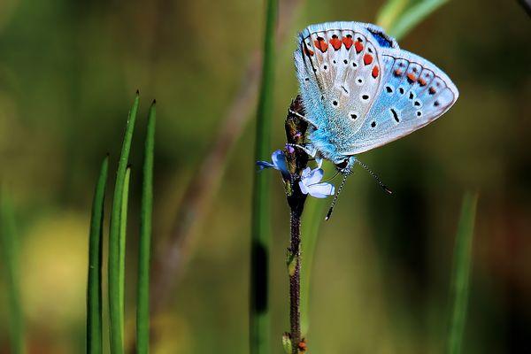 Bleu ...azuré!...
