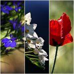 * bleu * blanc * rouge *